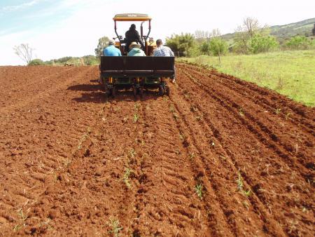 Agricultura iniciou plantio de Grama Perene