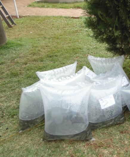 Secretaria de Agricultura abre inscrições para pedidos de alevinos